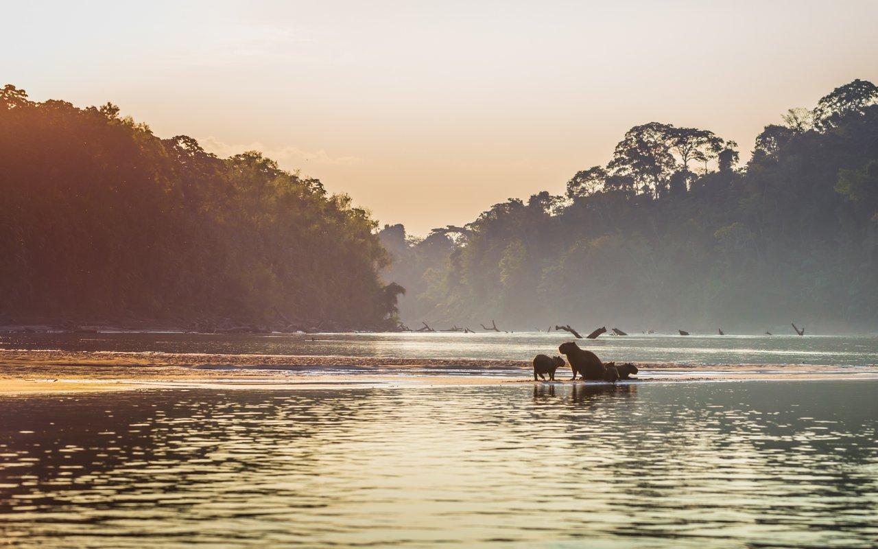 Parc national de Manu au Pérou