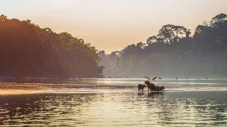Aventure dans le Parc National de Manú