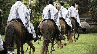 Le cheval paso péruvien