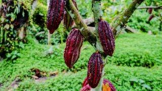 Le Nord oriental: des cultures de cacao à la forteresse de Kuelap
