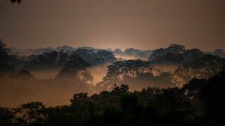 Vue panoramique sur la canopée de la réserve naturelle de Tampobata Amazonie - (c) Rainforest Tambopata Research Center