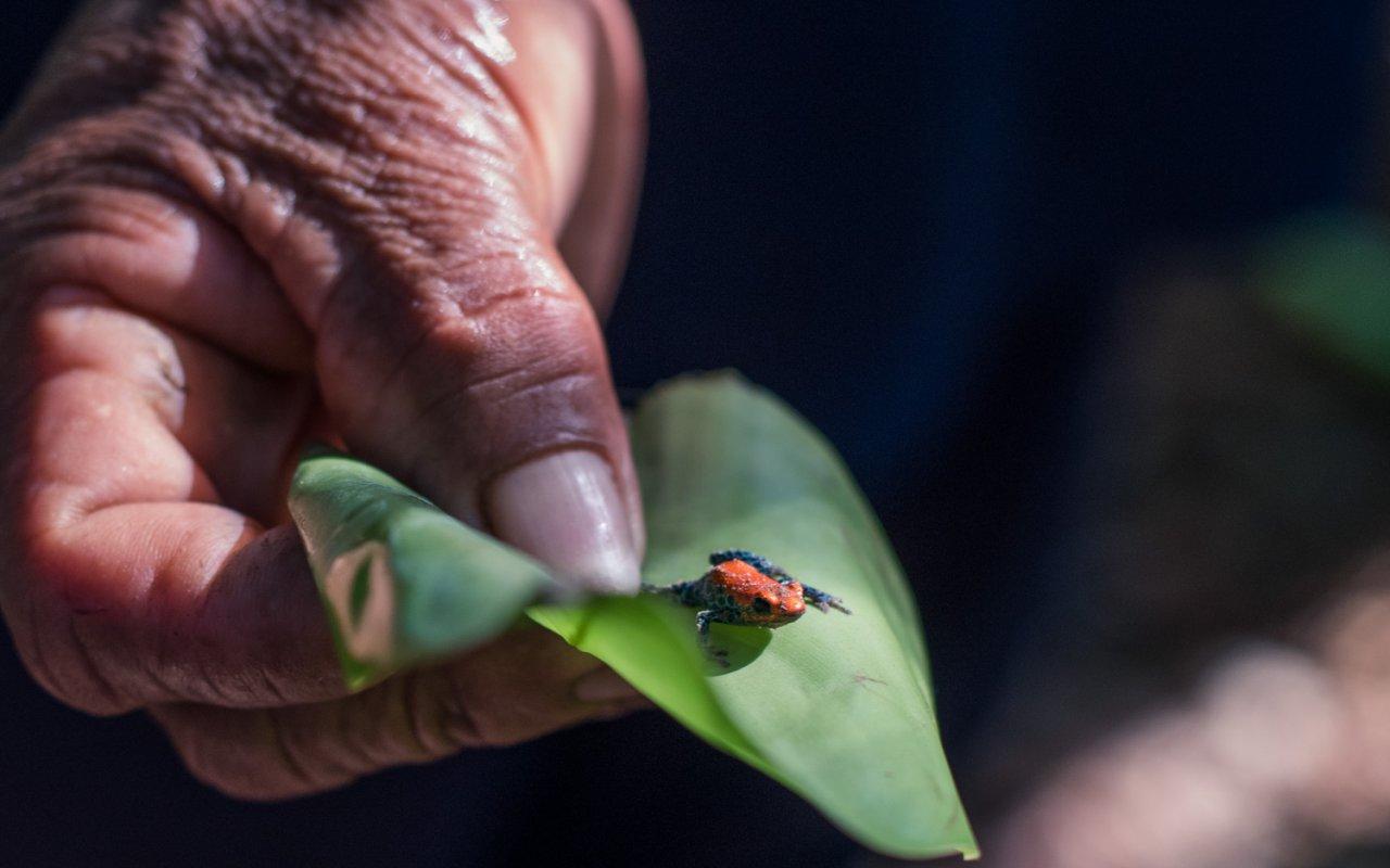 Insecte de la jungle amazonienne au Pérou