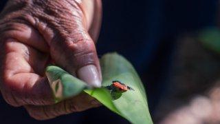 Activités et excursions en Amazonie