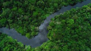 Vue aérienne sur l'Amazonie - Delfin III