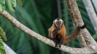 Amazonie : La Réserve Naturelle de Tambopata