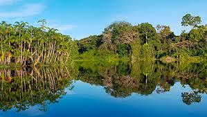 Amazonie forêt Pérou