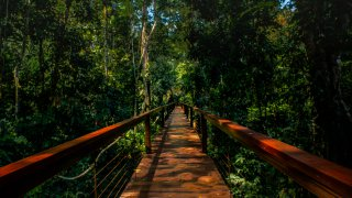 Passerelles du TRC au coeur de la réserve naturelle de Tampobata