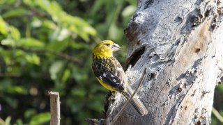 Oiseau reserve Chaparri