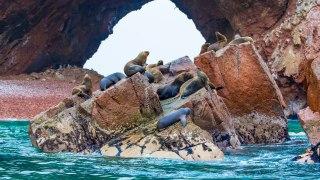 Colonie de Phoques au îles Ballestas Cote Pacifique Sud
