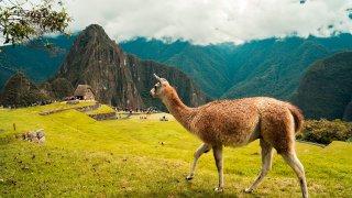 Trek du Lares : à la conquête du Machu Picchu !